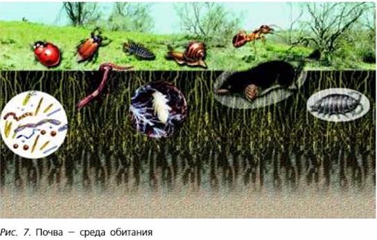 Почва - среда обитания