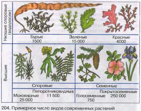Примерное число видов современных растений