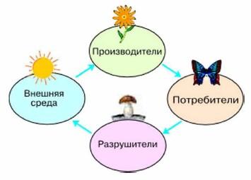 Взаимосвязь компонентов экосистемы